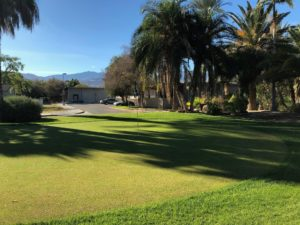 Golf course with palm tress